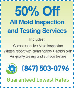 Arlington Heights Mold Inspection Cost