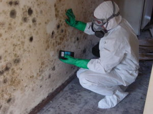Mold-Inspection-Arlington-Heights-IL